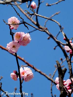 梅? 桃? 桜?
